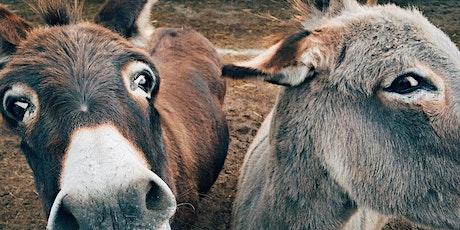 """Taller """"Conocimiento de los burros"""" entradas"""