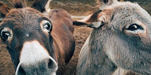 """Taller """"Conocimiento de los burros"""""""