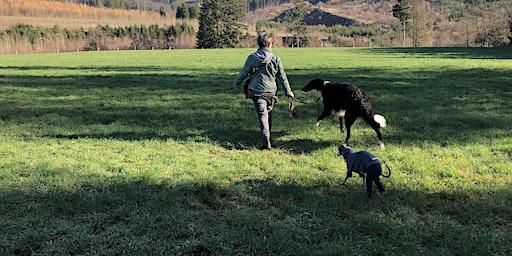 Training für Windhunde München und Umgebung