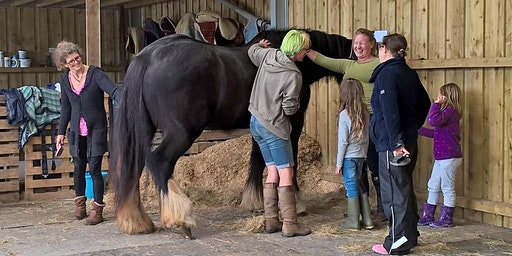 Horse Play for Girls 2020