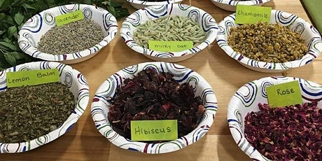 Herbalism Camp for Ages 9-12 tickets