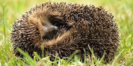 Hedgehog Houses & Bug Hotels tickets