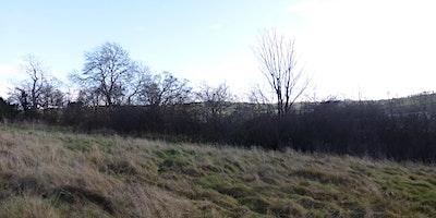 Hedge Restoration Workshop