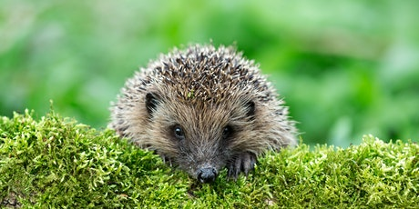 Cancelled: Family Event: Build your own Hedgehog Home! tickets
