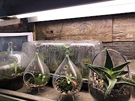 Earth Month: Create Your Own Terrarium