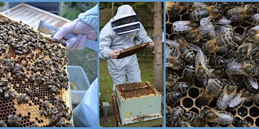 Hobby Beekeeping Essentials Workshop
