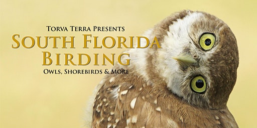 Photo Workshop - Birds of South Florida