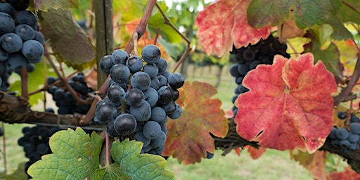 Vines to Wines - 2020 Viticulture Series - Sign up for all 10 classes now!