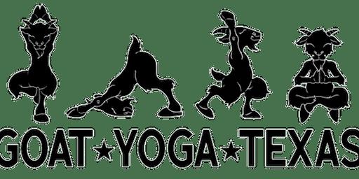 Goat Yoga at Cane Island