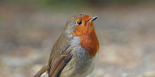 Bird Walk Workshop