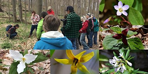 2020 Spring Wildflower Walk