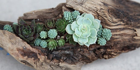 DIY Succulents and Driftwood Centerpiece @ Sweet Digs tickets