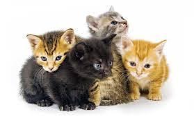 Tats Fur Cats