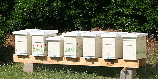 Bucks Beekeepers: Making Splits and Nucs