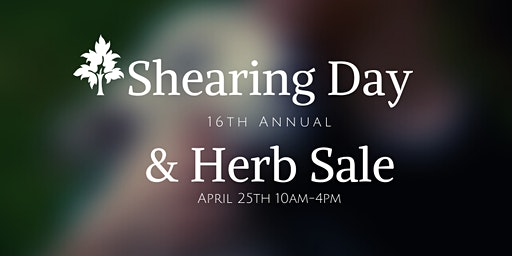 16th Annual Shearing Day & Herb Sale