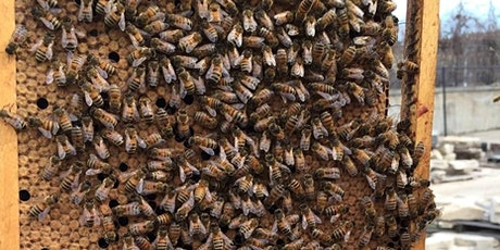 11th Annual Bee Forum: Bee Science - From the Lab to your Beehive tickets