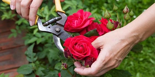Rose Pruning & Care