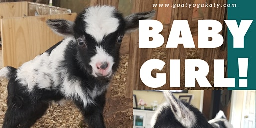 Baby Goat Yoga - Sat, February 22nd @ 10:30 AM