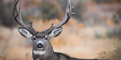 Chronic Wasting Disease Symposium