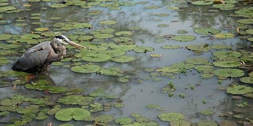 DC Audubon Society Bird Walk at Kenilworth Aquatic Gardens