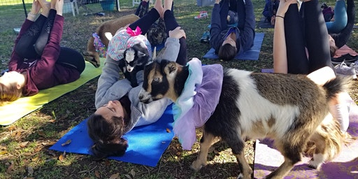 Baby Goat Yoga - Sat, March 14th @ 1:30 PM