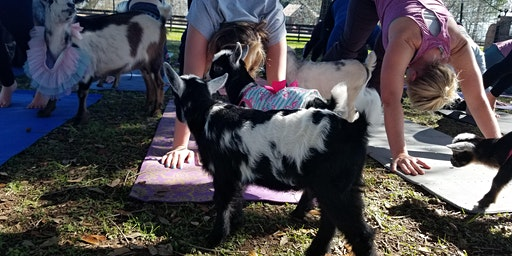 Baby Goat Yoga - Saturday, March 14th @ 6 PM