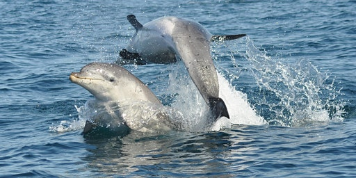 Port Phillip Bay's Burrunan dolphins and more!