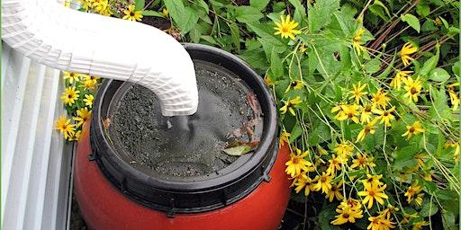 Rain Barrels, Rain Gardens & Solving Water Issues in Your Yard