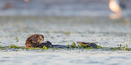 "CANCELED: ""Sea Otter Conservation and Ecology in the 21st Century"" tickets"