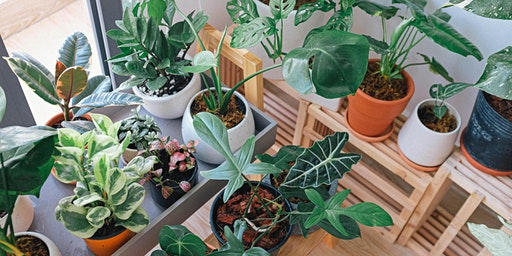 Houseplants 101 Course / Cwrs Planhigion Tŷ