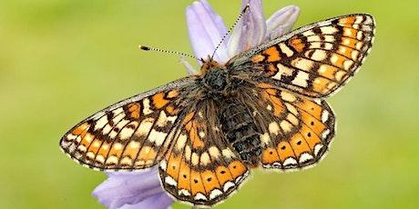 Butterfly Walk tickets