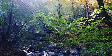Forest Bathing Experience for National Tree Week tickets