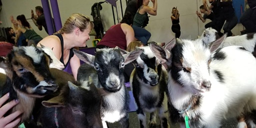 Naaamaste: Goat Yoga Experience