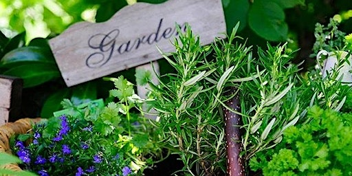 Starting Your Home Herb & Veggie Garden