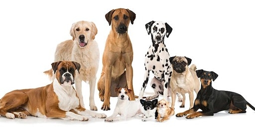 The Dog Park Project Informational Meeting