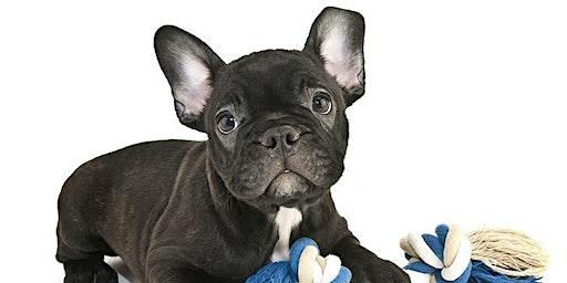 French Bulldog Play Date