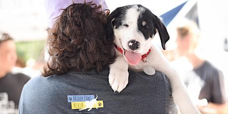 Foster Program Intro + Basic Dog Training 101 Information Session tickets