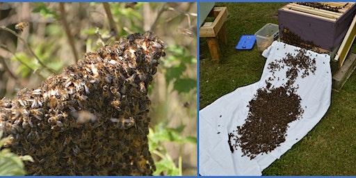 Swarm Busters Workshop