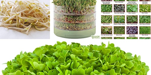 Microgreens and Sprouts...food for tiny spaces