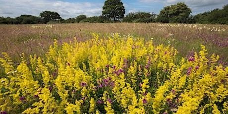 Wildflower Photography Workshop tickets