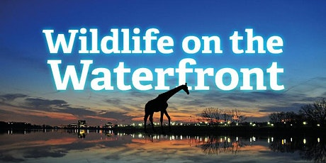 Wildlife on the Waterfront tickets
