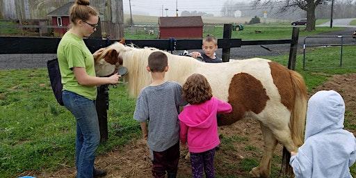 Pony Grooming Series