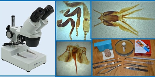 Anatomy and Dissection Microscopy Workshop