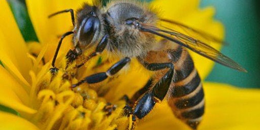 Pollinator 101