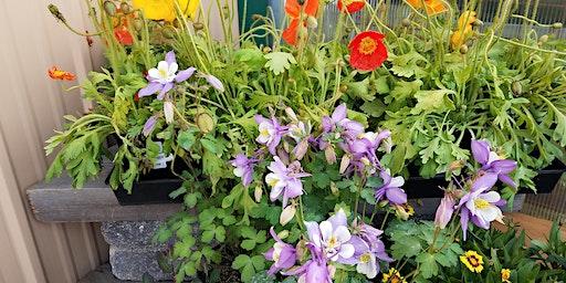 Perennial Garden Design: Part 2