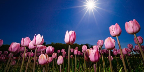 Tulips by the Ton tickets