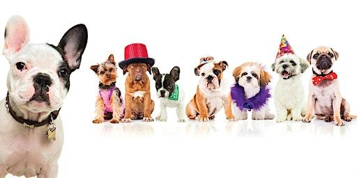 Party 4 Paws: Pet Fair & Adoption Day