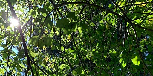 Mornington: Summer walk, plant talk and foraging.