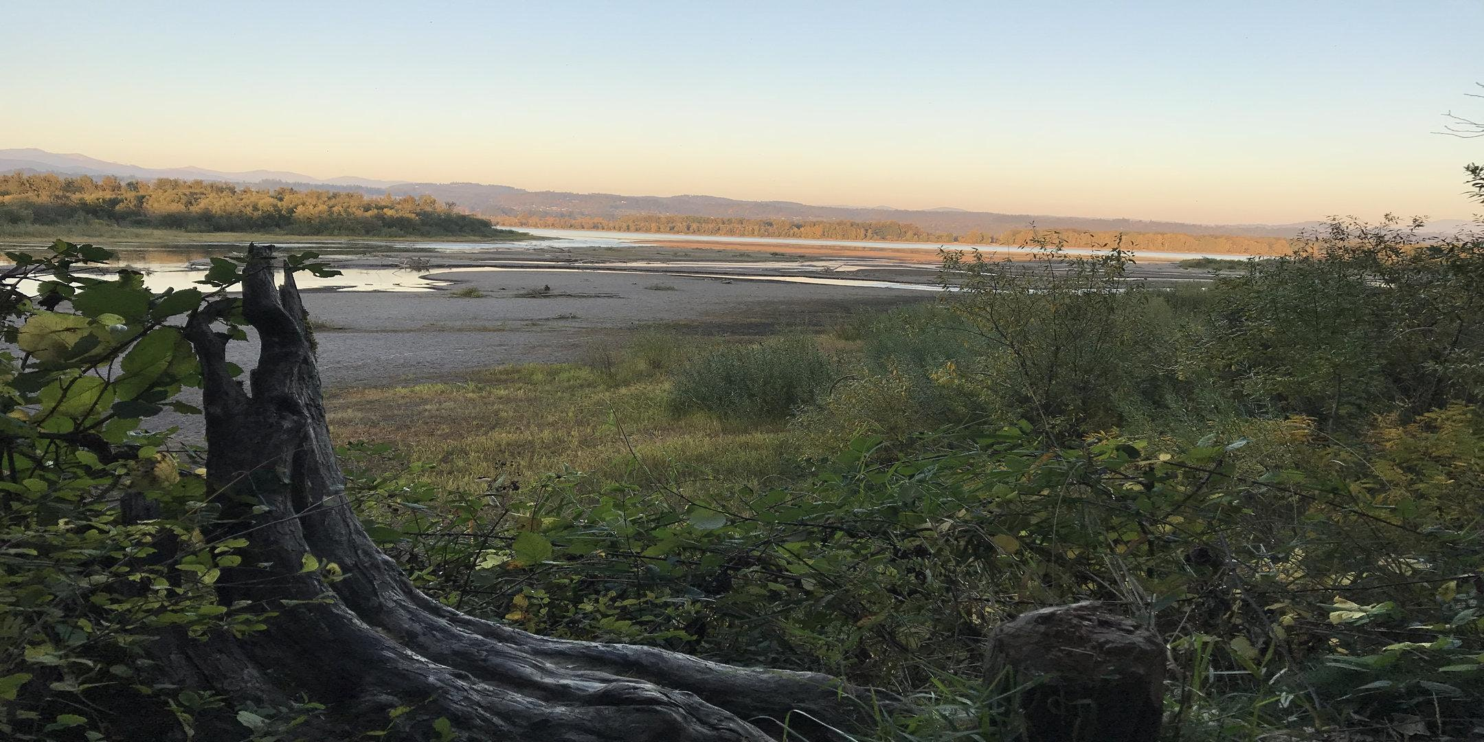 CANCELED: Sandy River Delta Evening Walk, OR