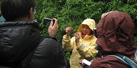 Identification de plantes médicinales sauvages (cours 202) billets